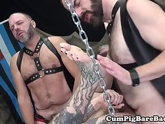 Inked otter bareback fucked by two bears
