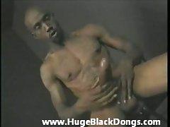 Hung like a stallion