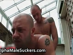Hot alpha males in gay fucking and sucking