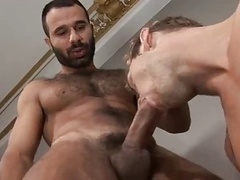 Turkish Stud